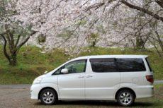 桜の木の下で停車しているミニバン霊柩車